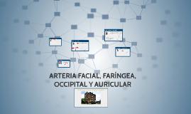 Copy of ARTERIA FACIAL, FARÍNGEA OCCIPITAL Y AURICULAR