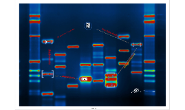 Der Genetische Fingerabdruck