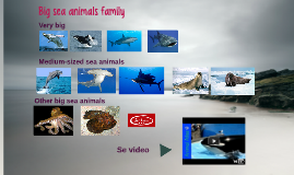 Big sea animals family