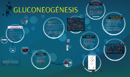 Copy of GLUCONEOGENESIS