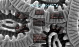 Prymnesiophyta