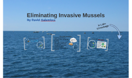 Eliminating Invasive Mussels