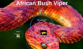 African Bush Viper by saadiq williams on Prezi