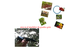 variedades de uva