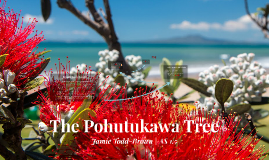 Copy of The Pohutukawa Tree