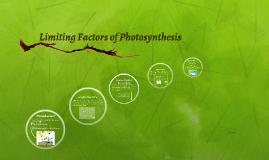Copy of Limiting Factors of Photosynthesis