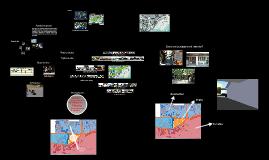 Copy of Proyecto en Contexto Rural: Boca Chica