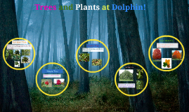 Trees and Plants at Dolphin!