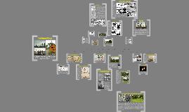 Copy of LABB Activity Timeline