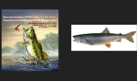 Bioconcentration of Phthalates in Lake Trout Resulting from