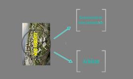 Copy of Apresentação Terrenos