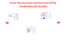 Assignment 3: Cardiovascular system
