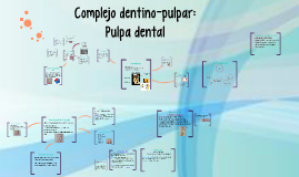 Copy of Complejo dentino-pulpar: Pulpa dental