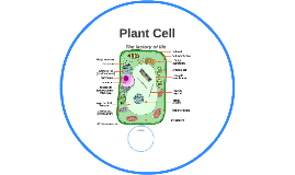 Plant Cell Demo