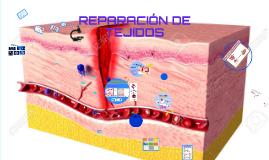 REPARACIÓN DE TEJIDOS