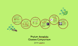 Phylum Annelida Classes Comparison