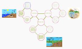 Carbon, Phosphorus, and Nitrogen Cycle