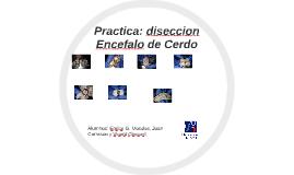 Practica: diseccion Encefalo de Cerdo