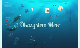 Copy of Ökosystem Meer