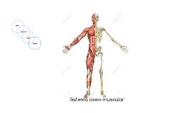 Sistema oseo-muscular