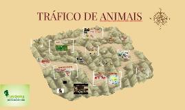 Copy of TRÁFICO DE ANIMAIS