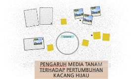 PENGARUH MEDIA TANAM TERHADAP PERTUMBUHAN KACANG HIJAU