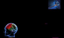 Modules 5 & 6 - The Brain