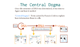 Molecular Genetics :The Central Dogma