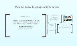 Pollution linked to lethal sea turtle tumors