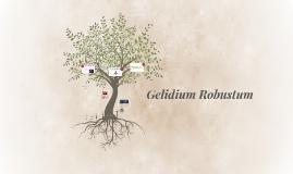 Gelidium Robustum