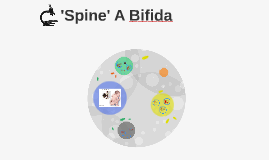 Spina Bifida Disease Project