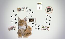 Spreekbeurt 'De lynx', Josefien