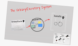 science human body system: urinary/excretory system