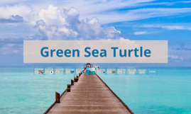Earth day project: Green Sea Turtle
