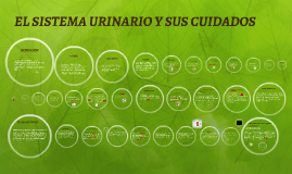 Copy of EL SISTEMA URINARIO