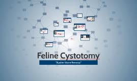 Feline Cystotomy
