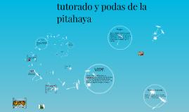 tutorato y podas de la pitahaya