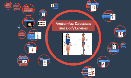 Body Planes and Anatomical Directions