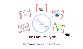 Copy of The Calcium Cycle