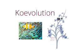 koevolution by isabell hendricks on prezi - Koevolution Beispiele