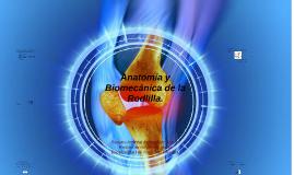 Anatomía y Biomecánica de la Rodlilla.