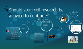 should stem cell research continue