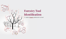 Forestry Tool Identification