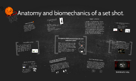 Copy of The anatomy and biomechanics used in a set shot