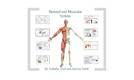 skeletal and muscularly system