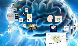 Copy of The Brain: The Journey