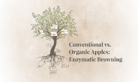 Copy of Copy of Conventional vs. Organic Apples: Enzymatic Browning