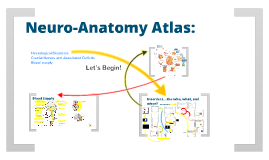 Neuro-Anatomy Study Guide Atlas