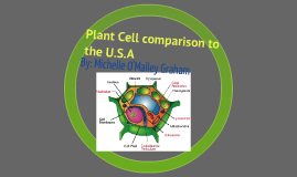 Plant Cell comparison to the U.S.A