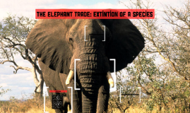 the elephant trade: extintion of a species